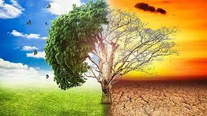 Cambio climatico 2019