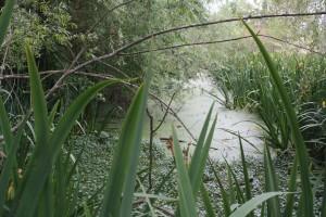 Caminata 9 de conviembre - humedal