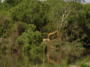 tala de bosques en Río Santiago
