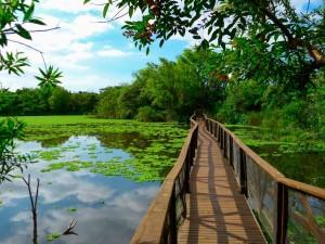 reserva-ecologica-vicente-lopez-