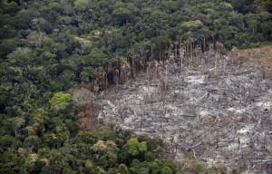 Pandemia y destrucción del planeta. Para art. del Foro